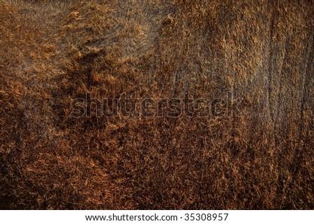 A natural cow fleece, woollen background