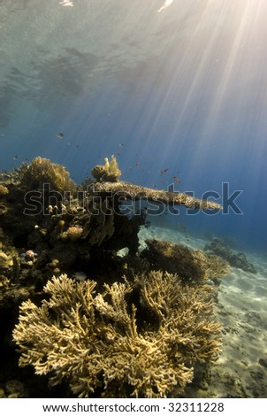 A natural light shot of a Coral Reef in the early morning light with Sun Rays.