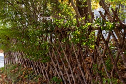 A natural wood weaved twig fence separating and protecting the garden. The three foot fence has crisscrossed narrow branches of rough spruce wood.  There are leaves on the ground among the large trees