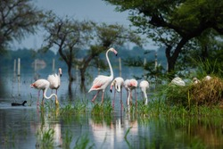 A nature painting by flamingo flocks