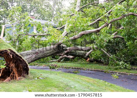 A neighbors tree gets blown down by Tropical Storm Isaias falling on to a house and over the driveway also taken doen the power lines. Stockfoto ©