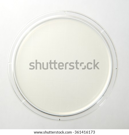 A new petri dish with clear media for creating bacterial cultures.