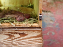 A new rabbit born 2 hours in a wooden box
