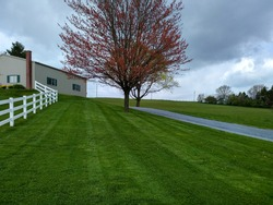 A newly mowed striped green lawn in the springtime.