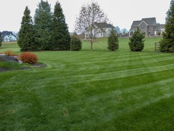 A newly mowed striped green lawn in the springtime with houses in the background.