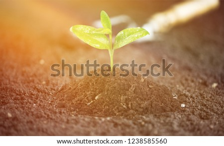 A newly planted plant #1238585560