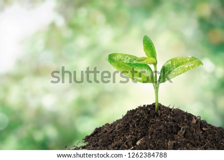 A newly planted plant #1262384788
