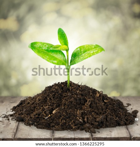 A newly planted plant #1366225295