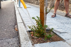 A newly planted small tree watering with a water hose in the street