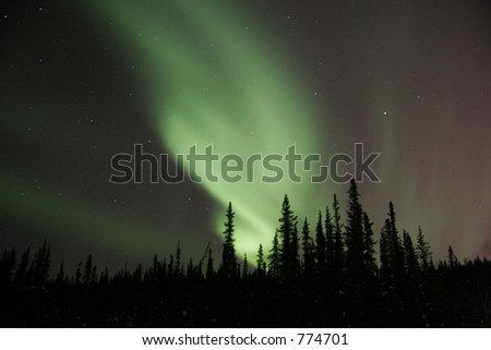 A nice bending aurora arc emerging from behind spruce trees