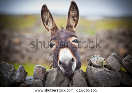 Photo of  A nice donkey under the rain . Aran Islands, Ireland.