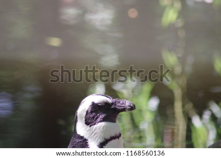 a nice picture of a penguin