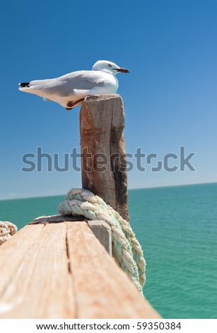 a nice seagull at the sea