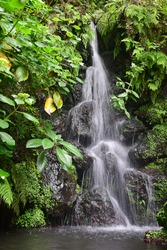 A nice small waterfall, flowing over rocks, with fern, moss and other plants. Long exposure.