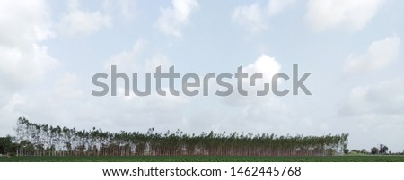 a nice view of combination of trees and clouds. its create a charming look. a fresh weather at morning time at farm. the bluish and greenish colors and clouds add more charm in this wide angle picture