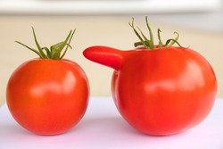 a normal and a deformed red tomato on a table with background