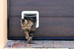 A Norwegian Forest Cat passes through a cat flap