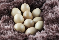 a number of chicken eggs on a fluffy cloth, isolated on a white background