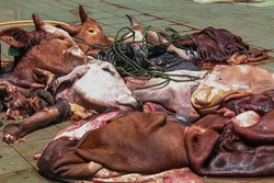 A number of pieces of cow's head and pieces of cow's body during Eid al-Adha celebrations. people slaughter cows