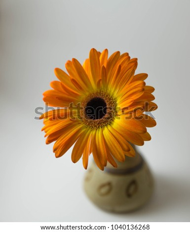 A Orange Gerbera in a Brown Vase.