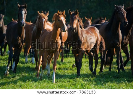 a pack of running horses