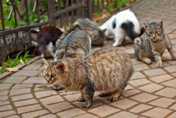A pack of stray cats eats from the asphalt. Many stray cats close up. Multicolored cats eat food.