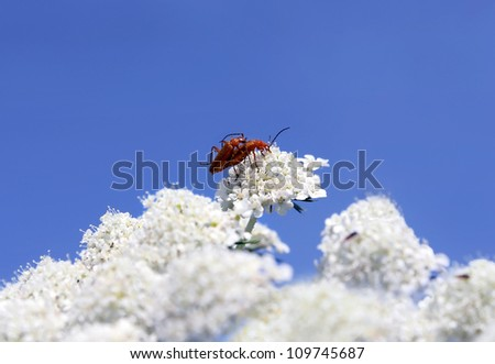 a pair of beetles reproduced on the bright white flower