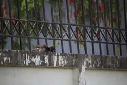 A pair of bulbul talking to each other.