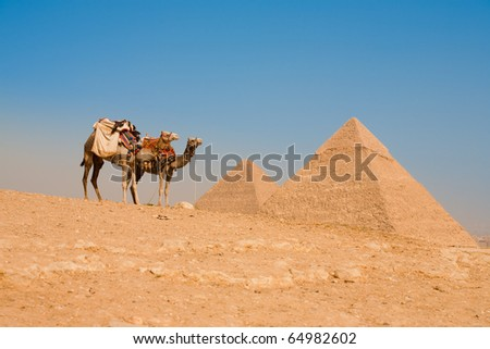 A pair of camels wait in front of the Pyramid of Khufu (Cheops) and Pyramid of Khafre to transport tourists back to the entrance of the Giza pyramids in Cairo, Egypt - stock photo