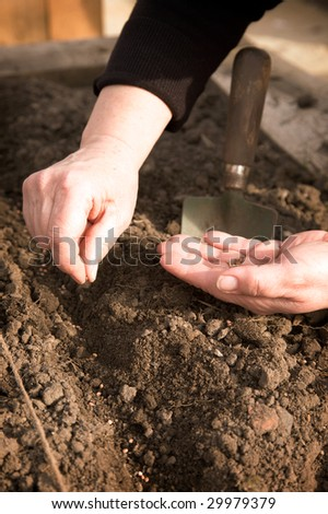 A pair of hands planting seeds in the ground.