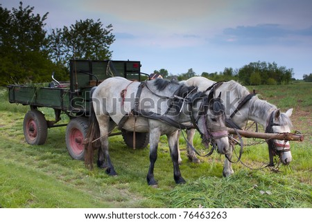 A pair of horses and an old cart in a rural setting