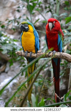 A pair of Macaw Parrots perched in a tropical setting. One is a Blue and Gold Macaw and one is a Green Wing Macaw.