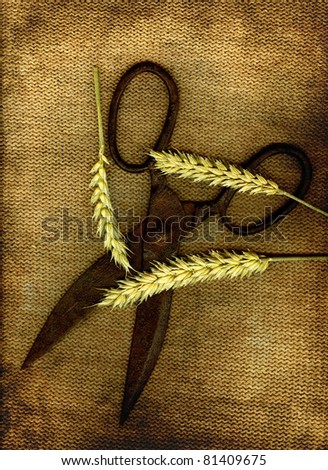A pair of old scissors with three sticks of wheat in grunge.