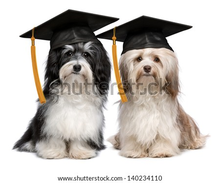 Wonderful Graduation Cap Black Adorable Dog - stock-photo-a-pair-of-proud-graduation-havanese-dogs-with-cap-isolated-on-white-background-140234110  Pic_2510046  .jpg