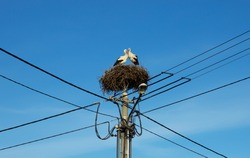 A pair of storks nests on power pole - blue sky - lamp