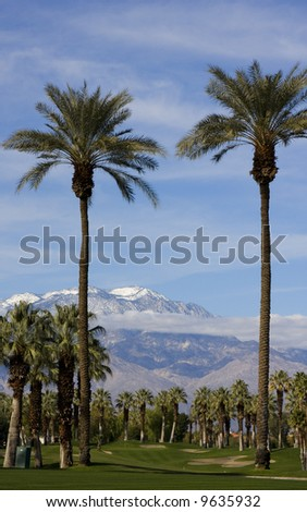 A pair of tall palm trees tower over a golf course.