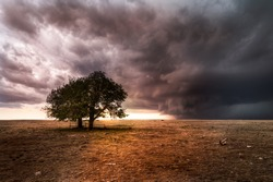 A pair of trees on the great plains during a sever thunderstorm. The sun is setting behind the storm on the horizon. The landscape is barren and dry.