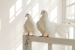 A pair of white decorative pigeons settiing on the window. Sunlight falls on the walls from high Windows