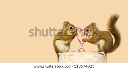 A pair of young squirrels in love holding candy canes in the shape of a heart, and looking happy while perched on a birch log with copy space. Part of a  series.