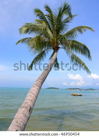 A palm tree at Ko Samui Island, Thailand - stock photo