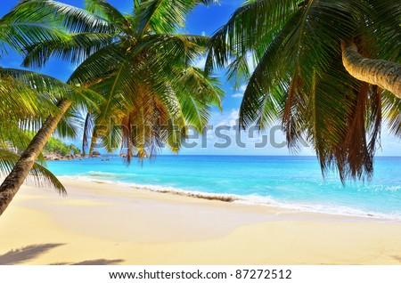 A palm tree bends over an empty sandy beach on Seychelles islands. Mahe, Anse Soleil