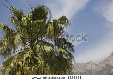 A palm-tree in the mountain