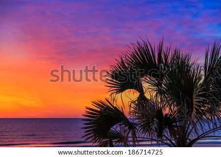 A palm tree is silhouetted by a dramatic, colorful sunrise sky over the Atlantic Ocean on a Florida beach.