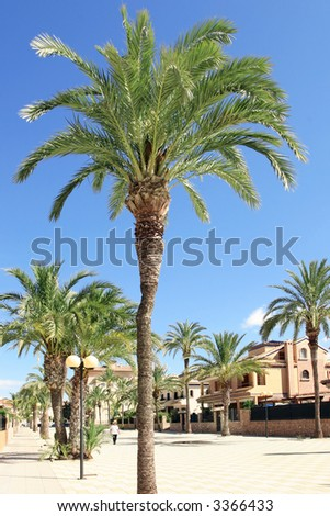 a palm tree lined pedestrianized road