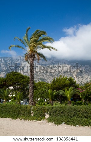 a palm tree on a background of mountains