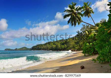 A palm trees bend over an empty sandy beach on Seychelles islands. Mahe, Anse Takamaka