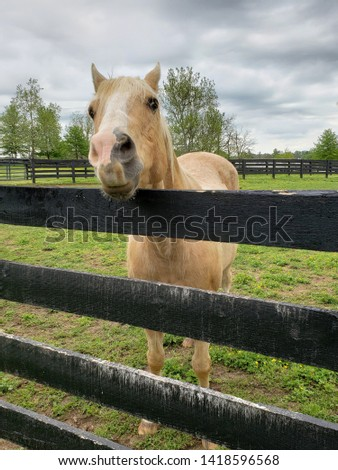 A palomino horse waiting for attention  #1418596568