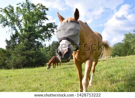 A palomino horse wearing a fly mask over a bright green landscape #1428713222