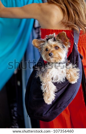 A pampered Yorkshire Terrier dog wearing a designer rhinestone collar and hair bow siting in a sling carrier being worn by a woman that is out shopping at a pet-friendly clothing store