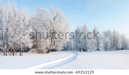 A Panorama of frosty day in the winter forest.